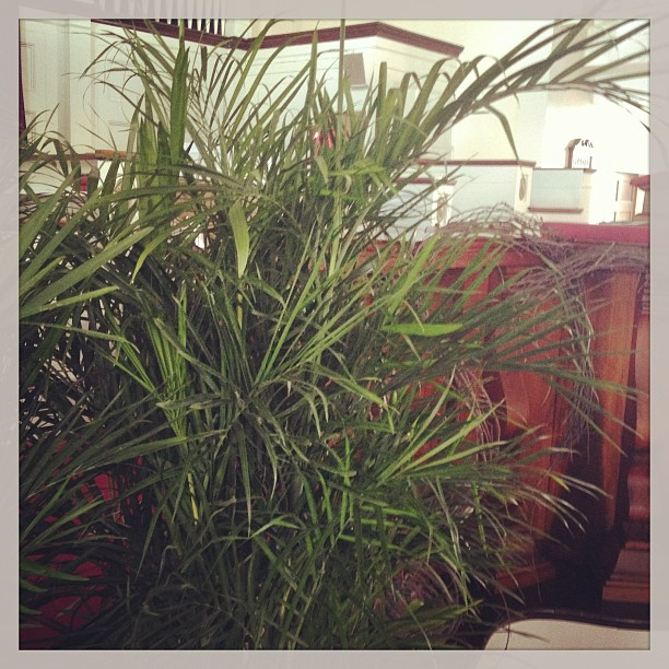 A Simple Palm Sunday
